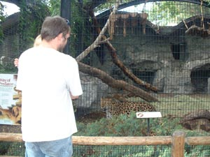 Adrianna, Greg, and a leopard at the Denver Zoo