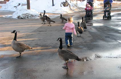 Adrianna and the geese